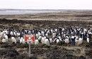 В 1982 Англия и Аргентина боролись за контроль над Фолклендскими островами.