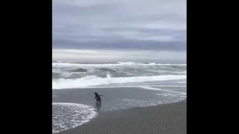 Пингвин и Море [ОВК]