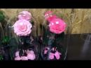 🌹Долговечная роза в стеклянной колбе