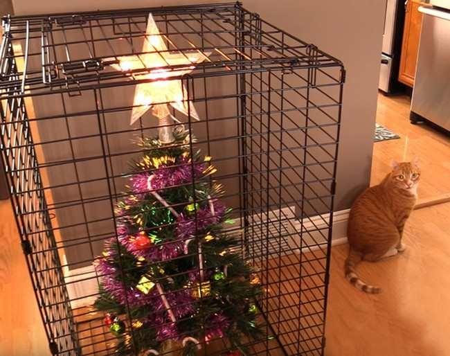 Как уберечь новогоднюю елку от нападения кошек