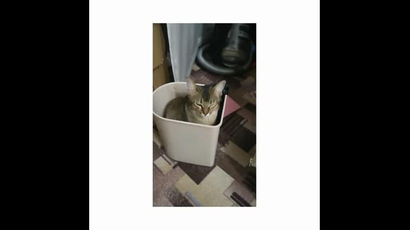 Моя кошь и любовь к мусорному ведру.mp4