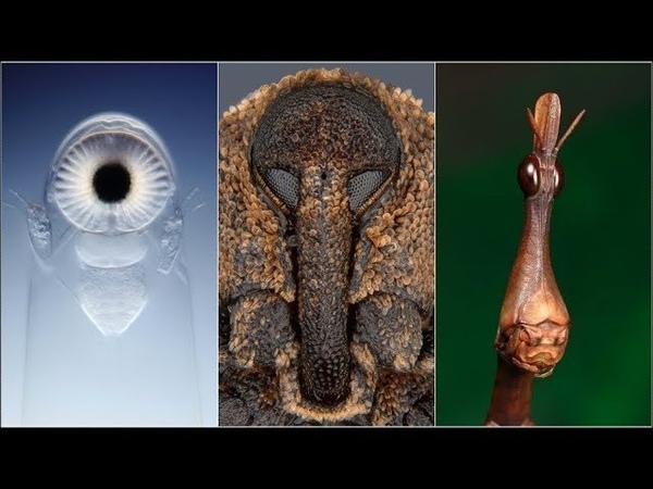Amazing Electron Microscope Images Part 5