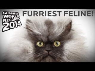 Longest Fur On A Cat! - Guinness World Records 2014 Sneak Peek