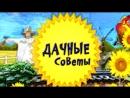 Дачные советы от Людмилы Ергаевой и ухаживаем за болгарским перцем и баклажанами