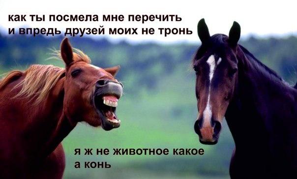 http://cs424523.vk.me/v424523107/7b36/Yj20C1O7DiQ.jpg
