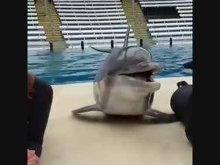 дельфин)))