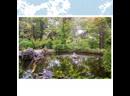 «Райский уголок» в Форосском парке