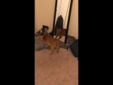 Кошка моей девушки любит делать это каждое утро ... многократно.
