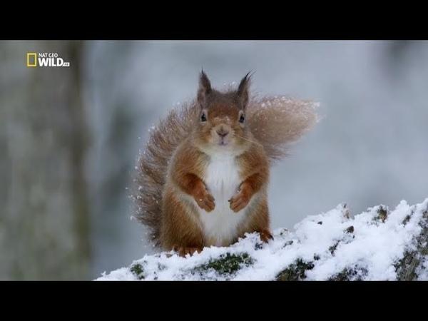 Nat Geo Wild: Дикая природа Шотландии: Высокогорье. Осень и зима (1080р)