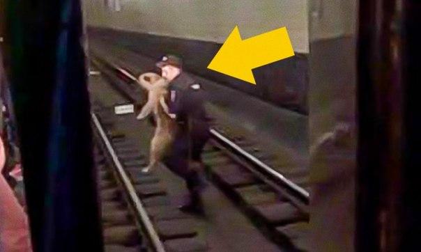 В московском метро полицейский совершил поступок, который вызывает восхищение: ↪ Был бы рядом, пожал бы руку 👋