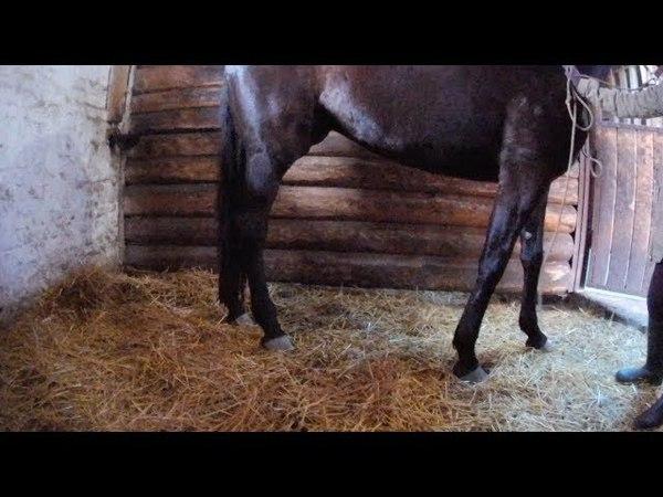 Гематома у молодой лошади