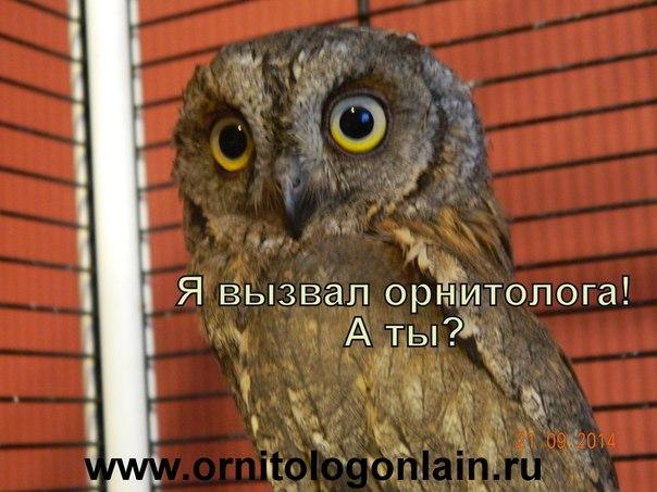 osp03-ECuDo.jpg
