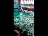 дельфинарий на Крестовском!!!