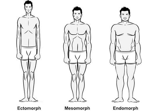 Генетический фактор и тип телосложения