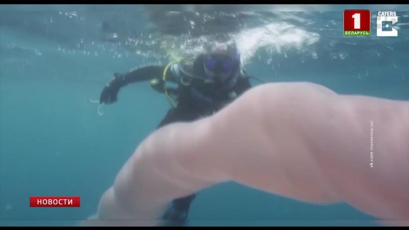 У берегов Новой Зеландии обнаружено удивительное морское животное