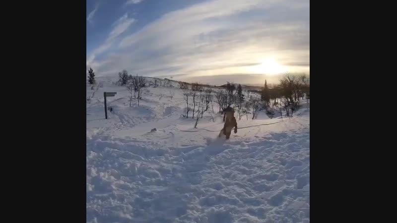 Собакевич из северной Швеции