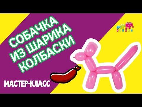 Собака из ШДМ: как сделать собачку из воздушных шаров?