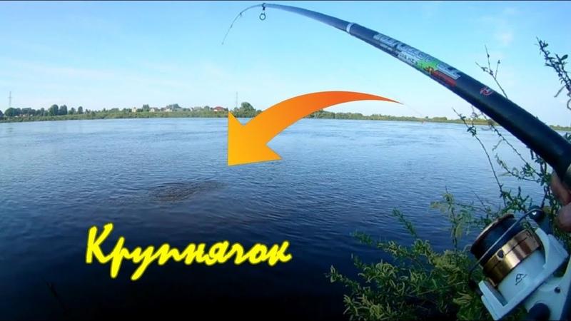 Рыбалка на Живца, Фидер, и Пенопласт Улов Крупный лещ и всякая мелочь.