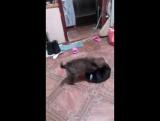 Привет из дома большая глушица Мишка
