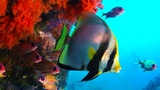 The Coral Reef 10 Hours of Relaxing Oceanscapes BBC Earth