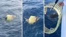 Good Samaritans Rescue Turtle Stuck In Plastic Basket