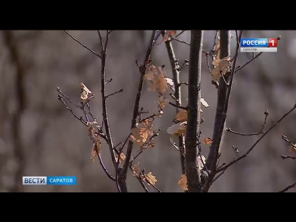 Цифровая дубовая аллея появится в Городском парке