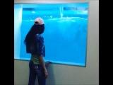 Дельфины в McDonald's. Лазаревское.