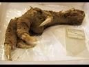 Запретная археология 3 000 000 000 лет назад
