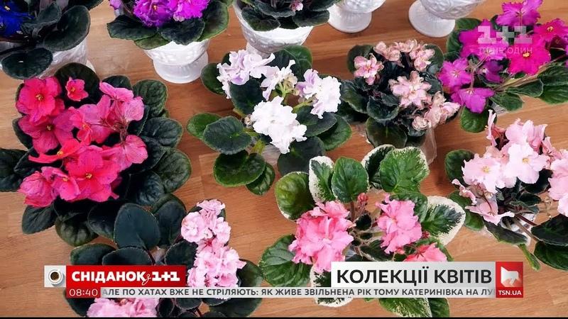 Скільки коштує колекція квітів і якого догляду вона потребує - Зелена ділянка