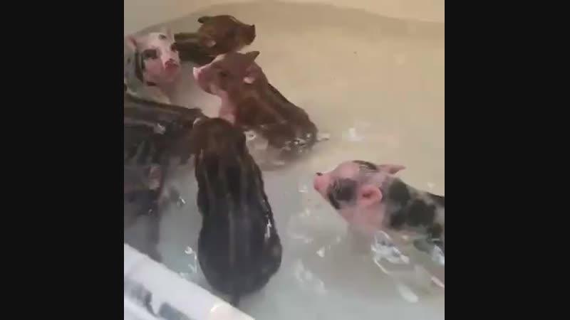Мыться любят все