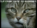 Arabesque - City cats  You win, hands down (Clip from Cats by Kuskow E.)