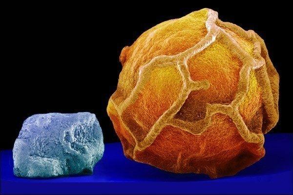 Тұз бен бұрыш микроскоппен қарағанда.