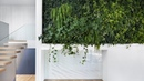 Naturehumaine enlivens mid-century Montreal house with plant-covered wall
