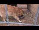 Зверополис Приют для животных в Рязани видео Телкова Сергея 09 02 2019