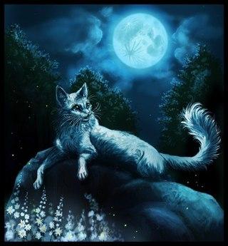 Арты коты воители красивые арты