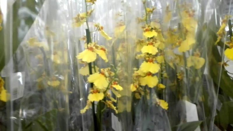 Садовод 23 Сентября, очень много Орхидей ....🐹🐹🐹🐹