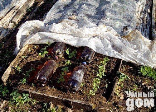 Дачная идея Пластиковые бутылки темного цвета с водой аккумулируют тепло, за счет того,что днем вода в них нагревается и ночью отдают его рассаде;а если их вкопать вертикально,они станут поддержкой для пленки и объем внутри парника увеличится Умный дом - уголок для дачника!