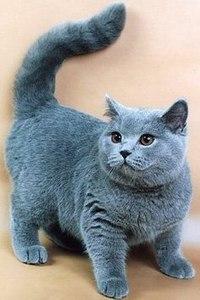 Кошки кошки фото психология кормление кошки фото кошки
