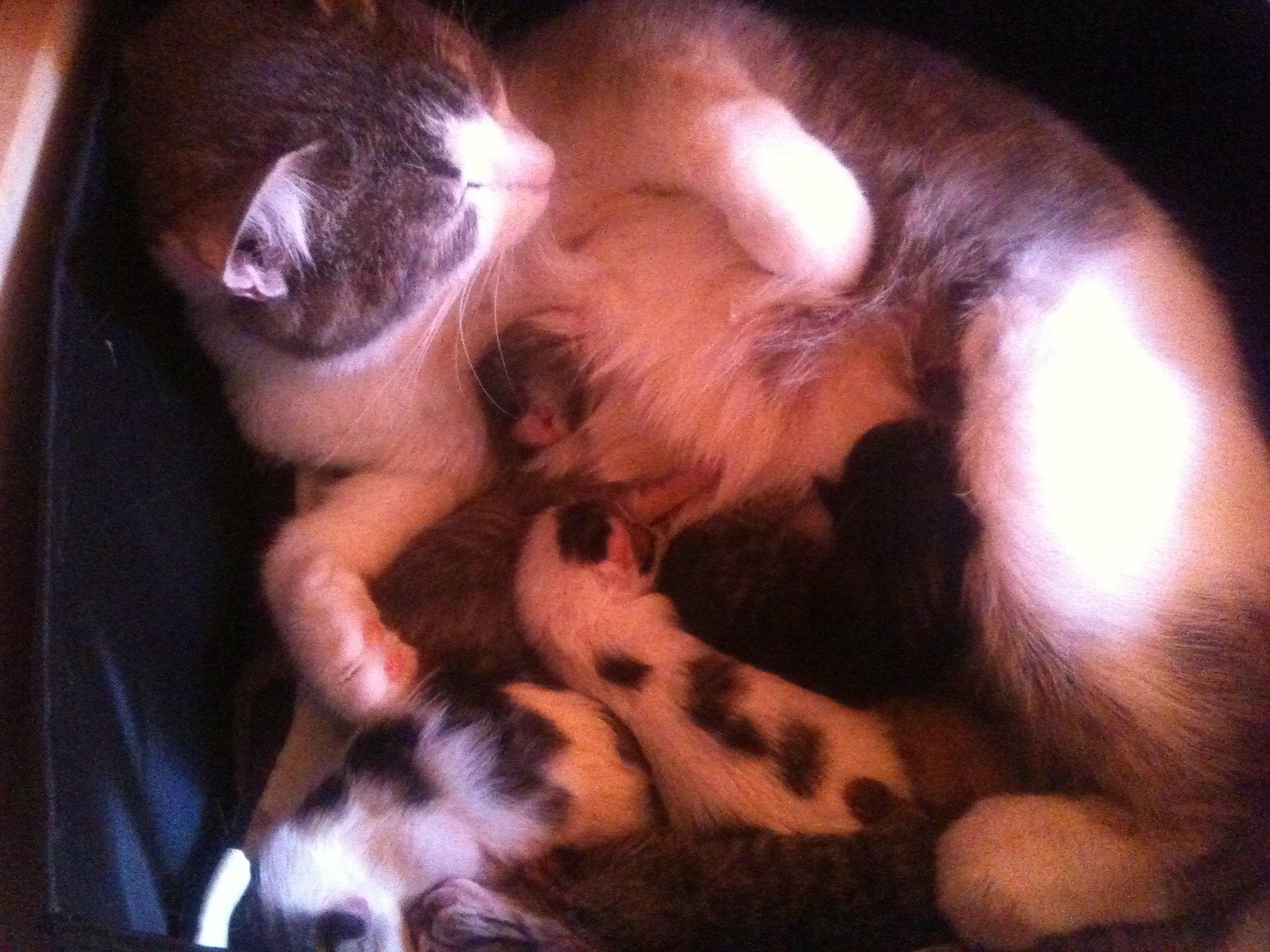 Психология кошки - Страница 2 X9OUuQknW2o