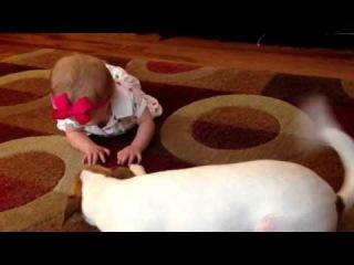 Собака учит ребенка ползать - Школа Бадди