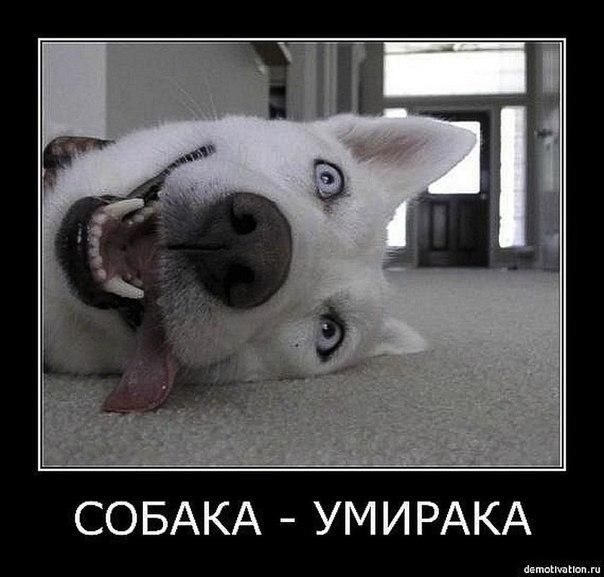 собака-умирака