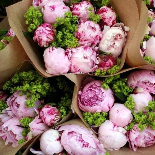 Цветут так чувственно махровые пионы… Как только солнце улыбнется из-за туч, Они раскроют свои страстные бутоны И ждут, когда их поцелует солнца луч.