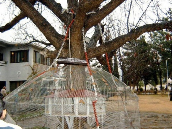 А вы знали, что в Пакистане есть арестованное дерево