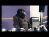 Cadbury - Gorilla
