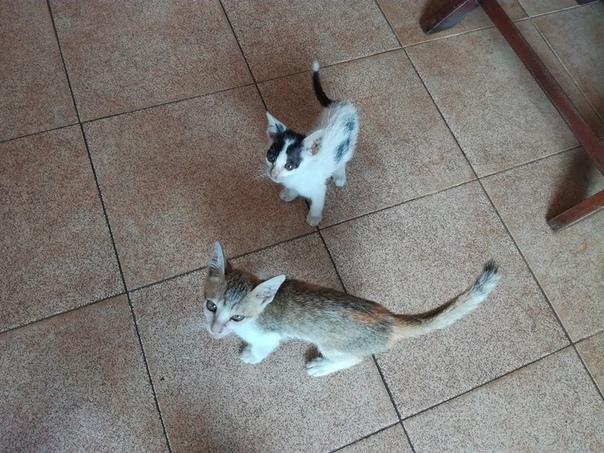 Вот как Диана Донатовна, вы не любите котиков - так это все. А как кормить бедных вьетнамских котиков - так одна Диана Донатовна. Эти котики тощие живут при одном из самых дорогих ресторанов