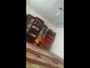 Каусар модинца жиенто