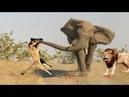 LİON vs ELEPHANT 22.05 2017 Gorilla Big Baboon Serval Cat - Most Amazing Wild Animal Attacks
