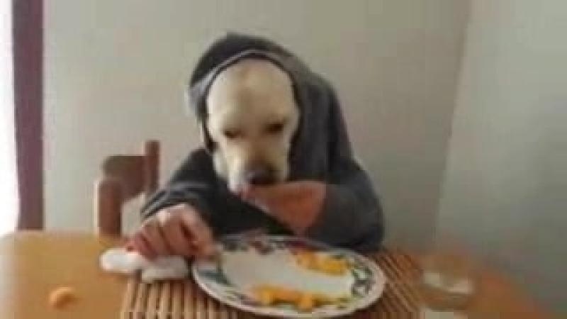 Бодя позавтракал