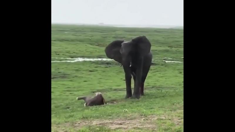 Рождение слоненка