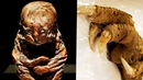 Что на самом деле ЕЛ человек 5300 лет назад ? Ученные это выяснили.